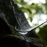 Web de araña fotografía de archivo