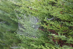 Web de araña imágenes de archivo libres de regalías