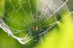 Web de araña con algunas gotitas de agua Fotografía de archivo libre de regalías