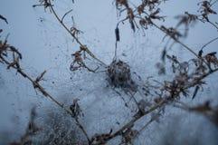 Web de araña con día brumoso del otoño de las gotas de agua Fotos de archivo
