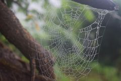 Web de araña con descenso del agua Imágenes de archivo libres de regalías