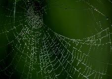 Web de araña con descensos Fotografía de archivo