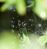 Web de araña con descensos de rocío Fotografía de archivo libre de regalías