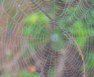 Web de araña con descensos de rocío Imagenes de archivo