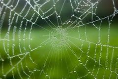 Web de araña con gotas de rocío Imágenes de archivo libres de regalías