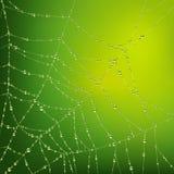Web de araña con gotas del agua Foto de archivo