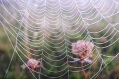 Web de araña con gotas del agua Imagen de archivo