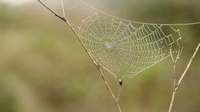 Web de araña con gotas de lluvia almacen de metraje de vídeo
