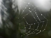 Web de araña con las gotitas de agua Imagenes de archivo