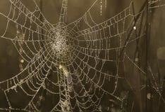 Web de araña con las gotitas de agua Fotos de archivo