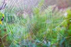 Web de araña con macro de las gotitas de agua, en luz del sol, en verano, GR Imagen de archivo libre de regalías