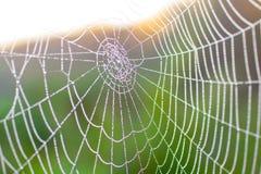 Web de araña con macro de las gotitas de agua, en luz del sol, en verano, GR Imagenes de archivo