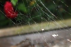 Web de araña con pequeños descensos del agua Imagen de archivo