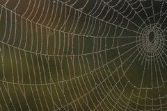 Web de araña con rocío Imagen de archivo libre de regalías