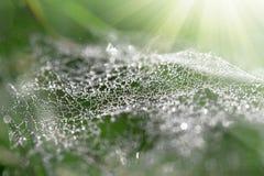 Web de araña con rocío de la mañana Foto de archivo libre de regalías