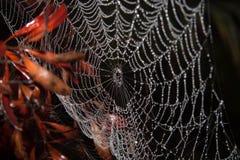 Web de araña cubierto de rocio Imágenes de archivo libres de regalías