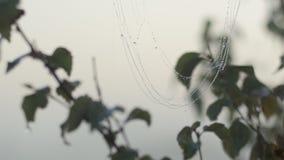 Web de araña cubierto en rocío metrajes