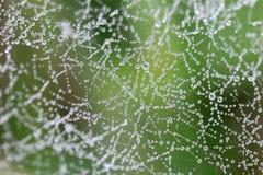 Web de araña del agua Fotografía de archivo
