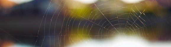 Web de araña delante de un fondo maravillosamente borroso Foto de archivo libre de regalías