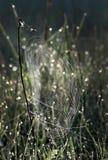 Web de araña después de una lluvia en una hierba Fotografía de archivo