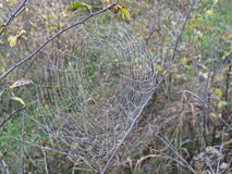 Web de araña en árboles de un fondo Fotos de archivo