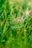 Web de araña en descensos Imagen de archivo