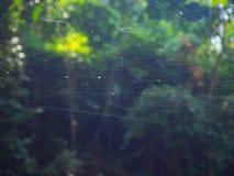 Web de araña en el árbol en el bosque con luz del sol Foto de archivo