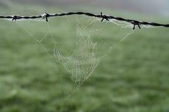 Web de araña en el alambre de púas fotos de archivo libres de regalías