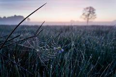 Web de araña en el amanecer Imagenes de archivo