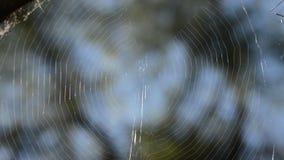 Web de araña en el bosque almacen de metraje de vídeo