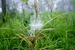 Web de araña en el día rainny Imagenes de archivo