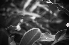 Web de araña en hierba Imagen de archivo libre de regalías