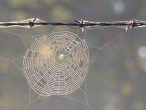 Web de araña en la ejecución de la niebla en el alambre de púas Foto de archivo libre de regalías