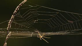 Web de araña en la luz trasera almacen de metraje de vídeo