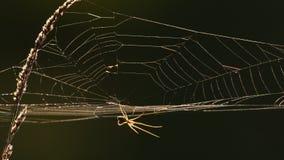 Web de araña en la luz trasera metrajes