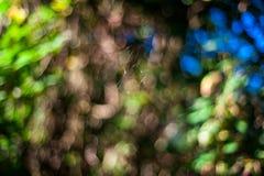 web de araña en la madera Fotografía de archivo libre de regalías