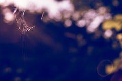 web de araña en la madera Fotos de archivo libres de regalías