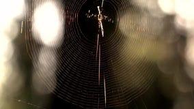 Web de araña en la madrugada del bosque almacen de video