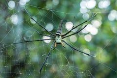 Web de araña en los árboles hermosos por la mañana Imágenes de archivo libres de regalías