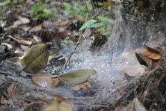 Web de araña en natural Imagen de archivo libre de regalías