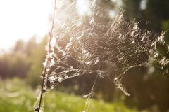 Web de araña en salida del sol otoñal Foto de archivo libre de regalías