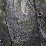 Web de araña espeluznantes en la niebla Fotografía de archivo