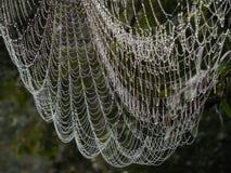 Web de araña grande con rocío como las joyas fotos de archivo