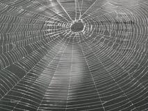 Web de araña grande de la forma redonda fotografía de archivo libre de regalías