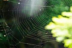 Web de araña hermoso con las sombras del backgroun verde del bokeh de la naturaleza Fotos de archivo libres de regalías