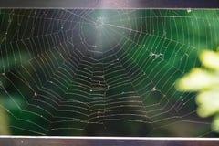 Web de araña hermoso en el puente de madera con el boke verde de la naturaleza Imágenes de archivo libres de regalías