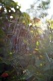 Web de araña iluminado por el sol del orbe del jardín Imagenes de archivo