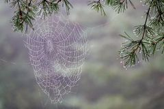 Web de araña mojado en la lluvia imágenes de archivo libres de regalías