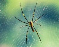 Web de araña para atrapar la presa en el salvaje Foto de archivo