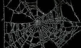 Web de araña polvoriento Fotos de archivo libres de regalías
